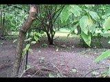 Волнистый попугай в парке