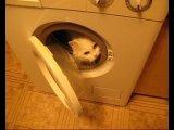 ролик про кошек